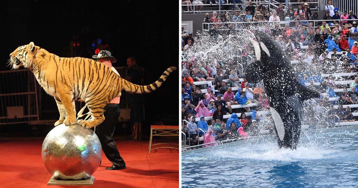 Francia prohibirá animales salvajes circos
