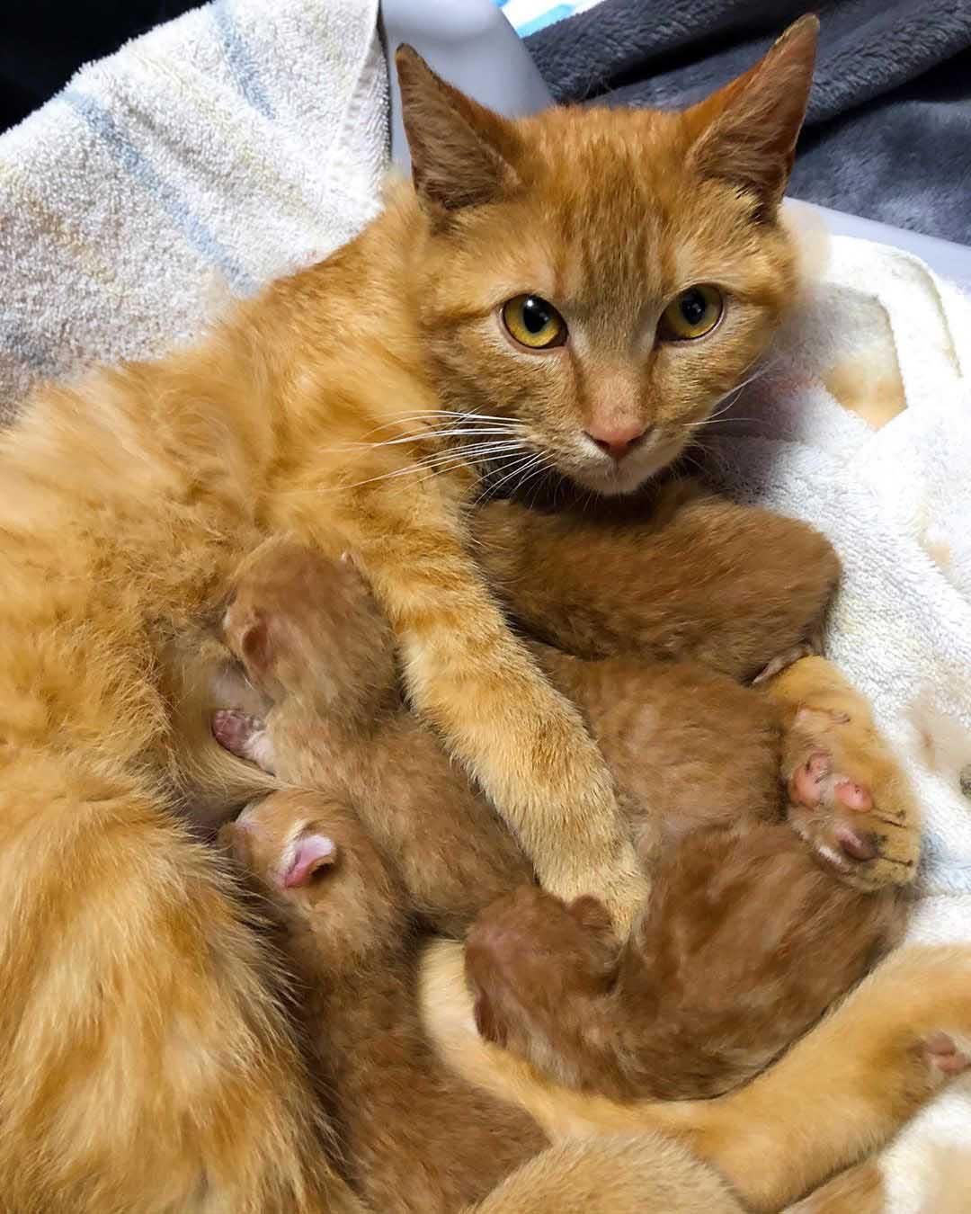 Gata cuida sus bebés