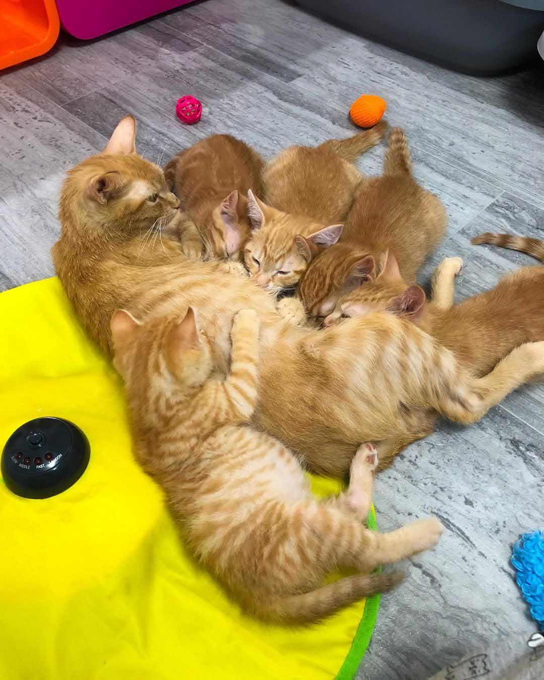 Gata adopta un gatito