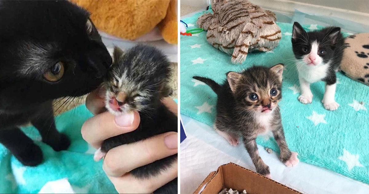 Gatito encuentra al amigo perfecto y espera pasar la vida junto a él