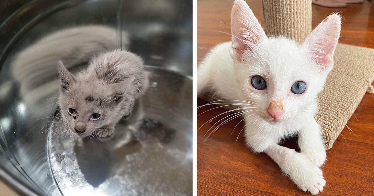 Gatito sin hogar encontrado cubierto de aceite revela su hermoso pelaje