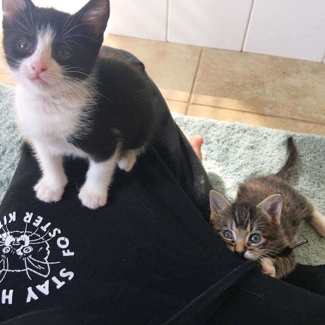 Gatito encuentra el amigo perfecto