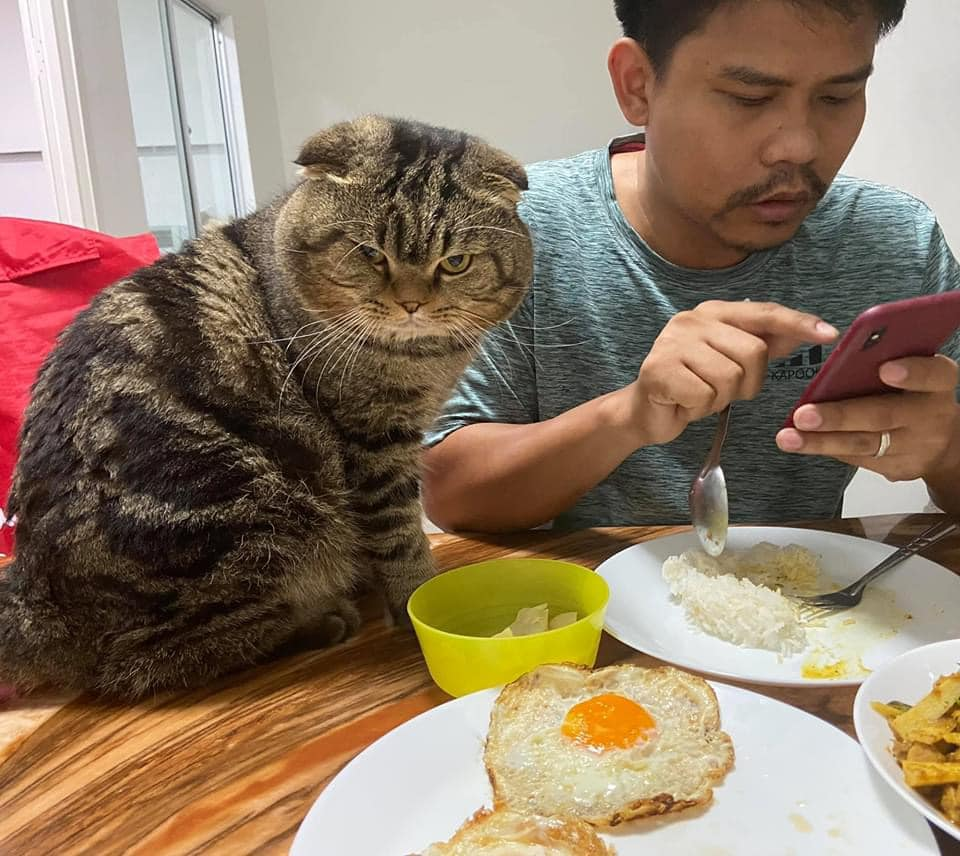 Gato acompaña a su humano