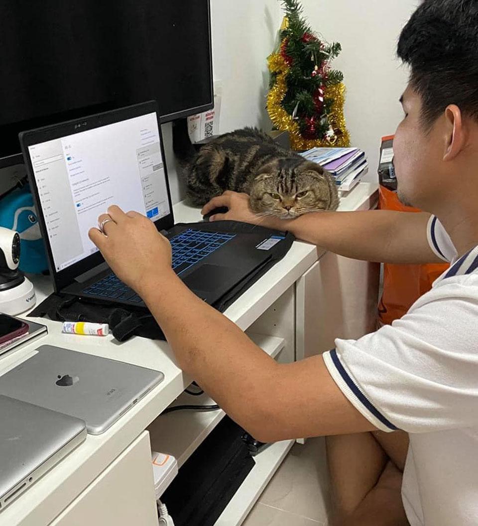 Gato junto a su humano