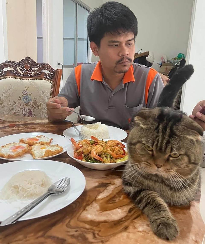 Gato le robó a su esposo