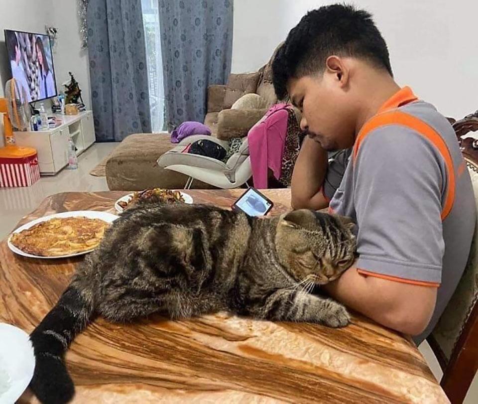 Gato le robó a su esposo y mantiene a su lado