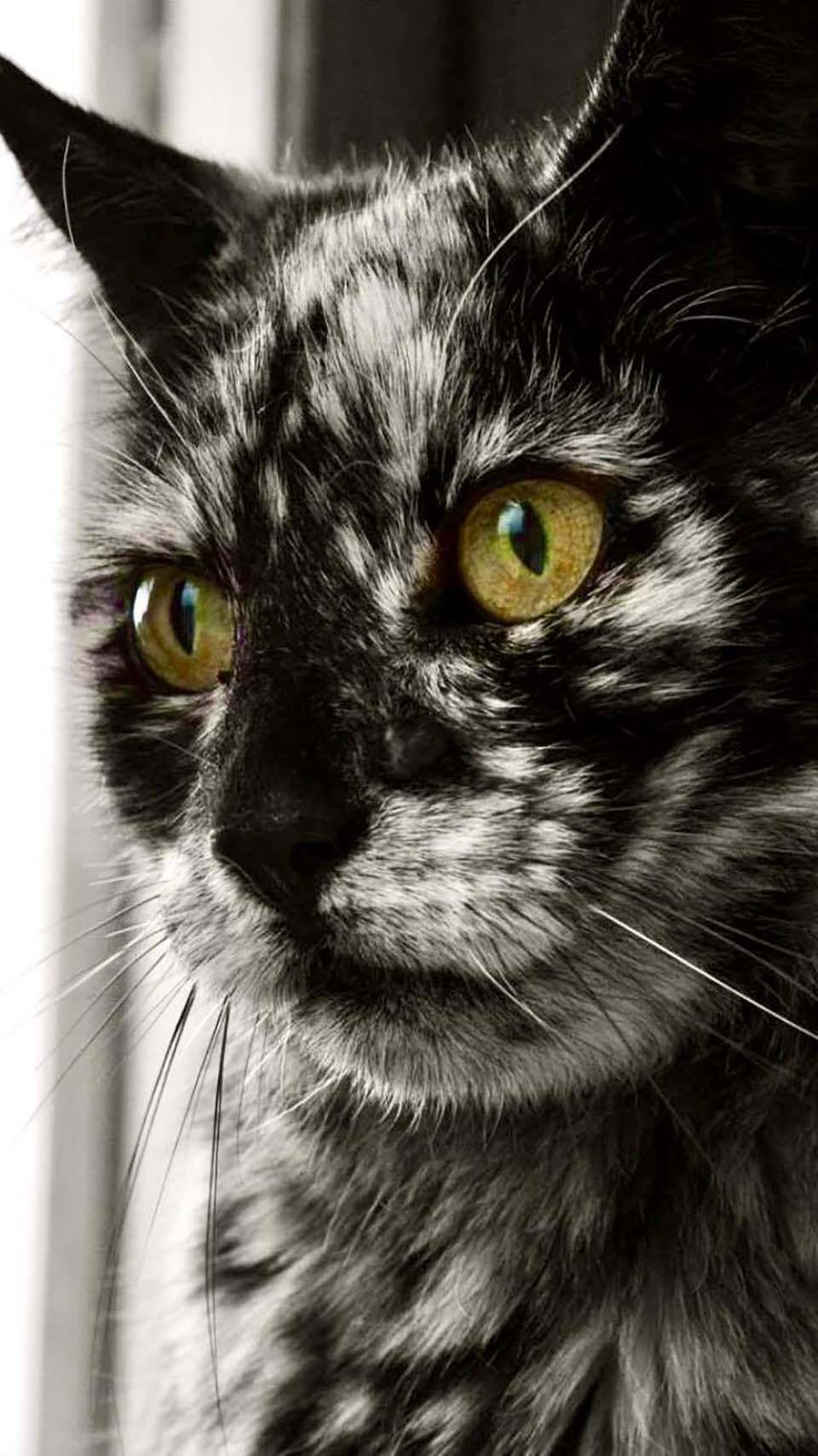 Gato se transforma completo