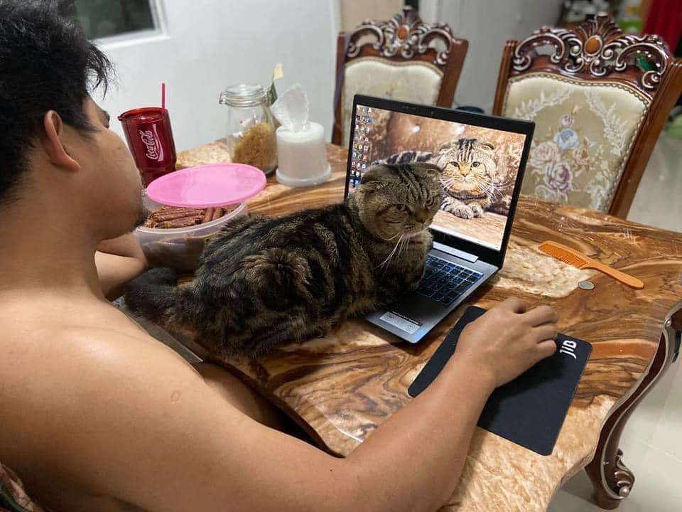 Gato sobre la computadora