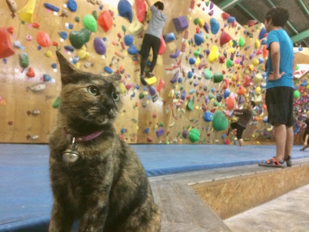 Gato trabaja en gimnasio