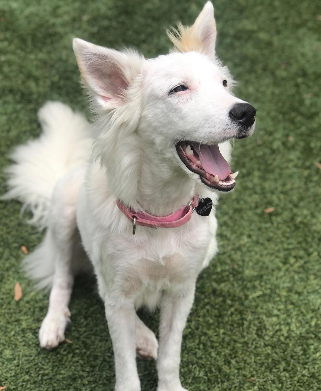 Hermosa perrita rescatada