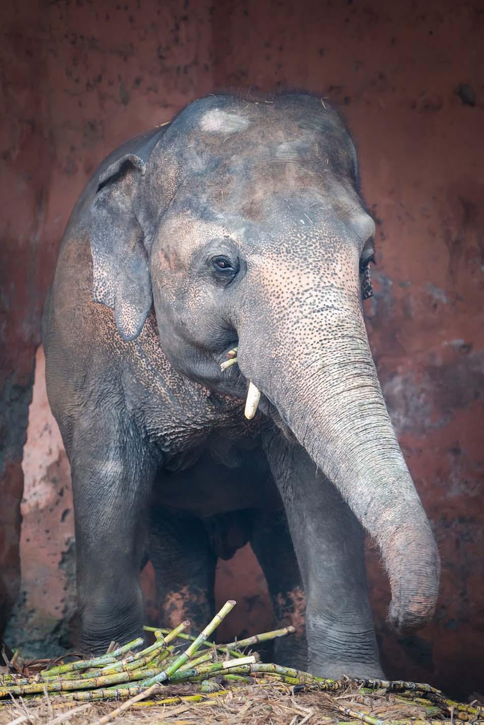 Kaavan fue liberado