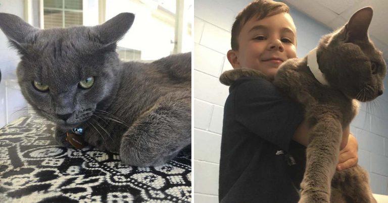 Familia estaba planeando adoptar un gatito hasta que vieron a este gato de cara triste