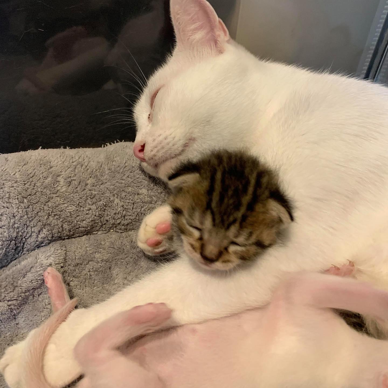 Linda mamá y bebé
