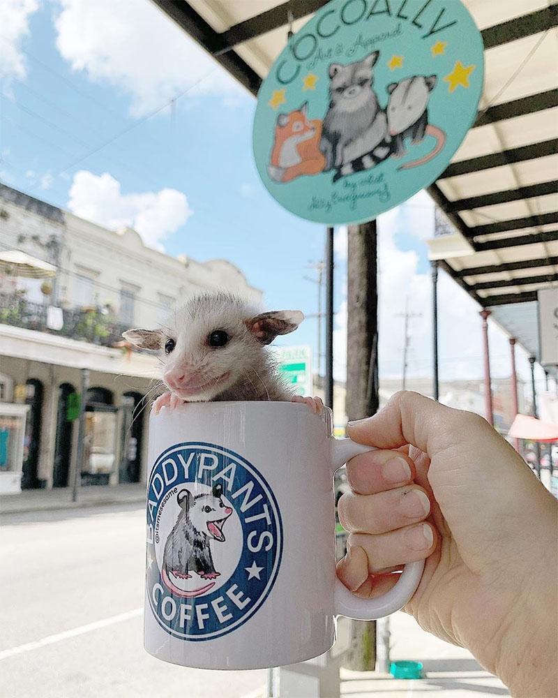 Marsupial en tasa de café