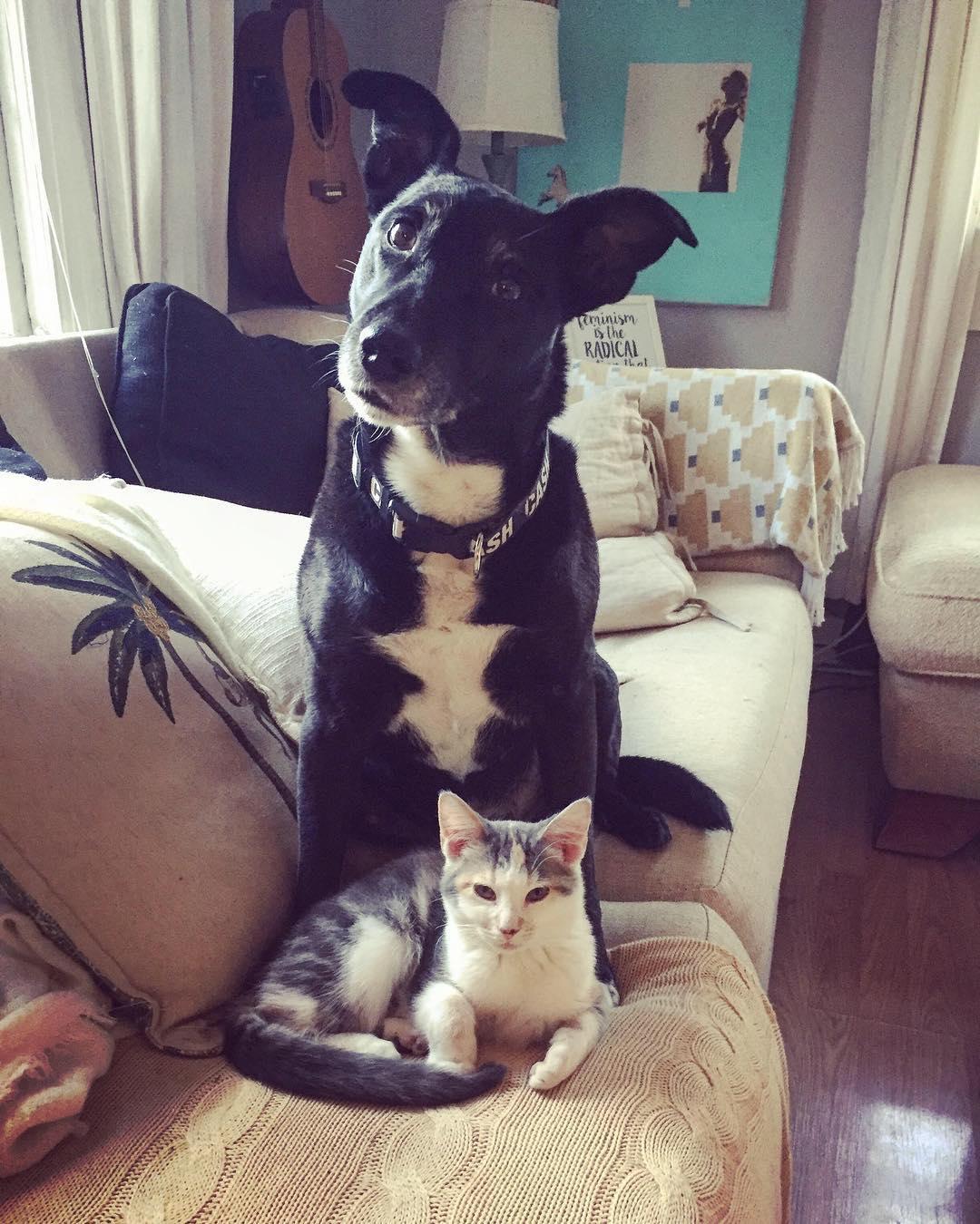 Mascotas compartiendo