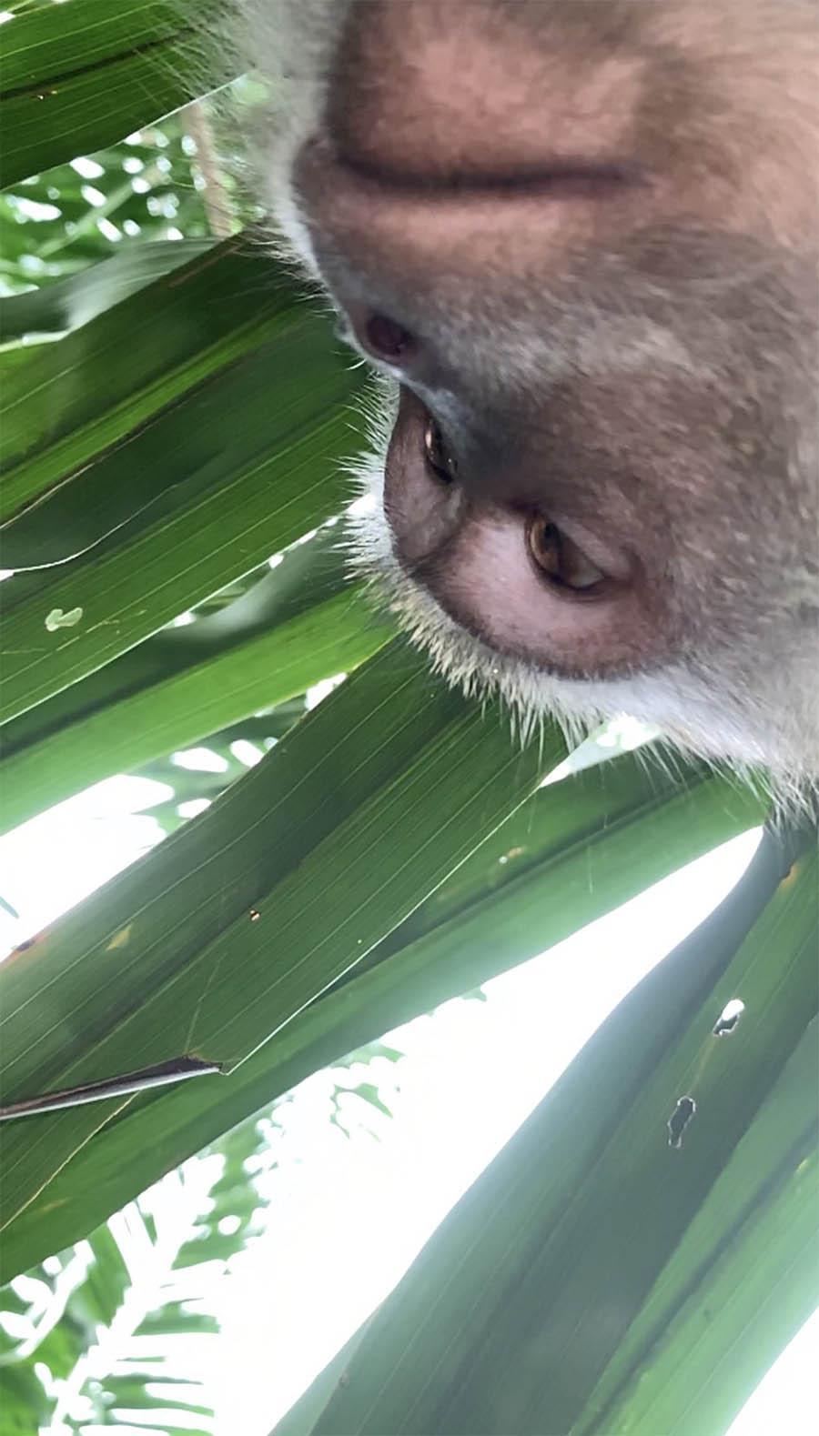 Mono roba teléfono celular