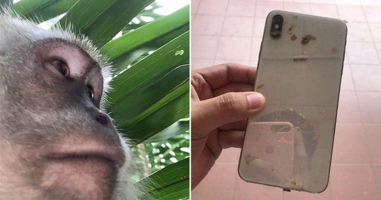 Mono roba el teléfono de este chico y lo usa para tomarse selfies en la jungla