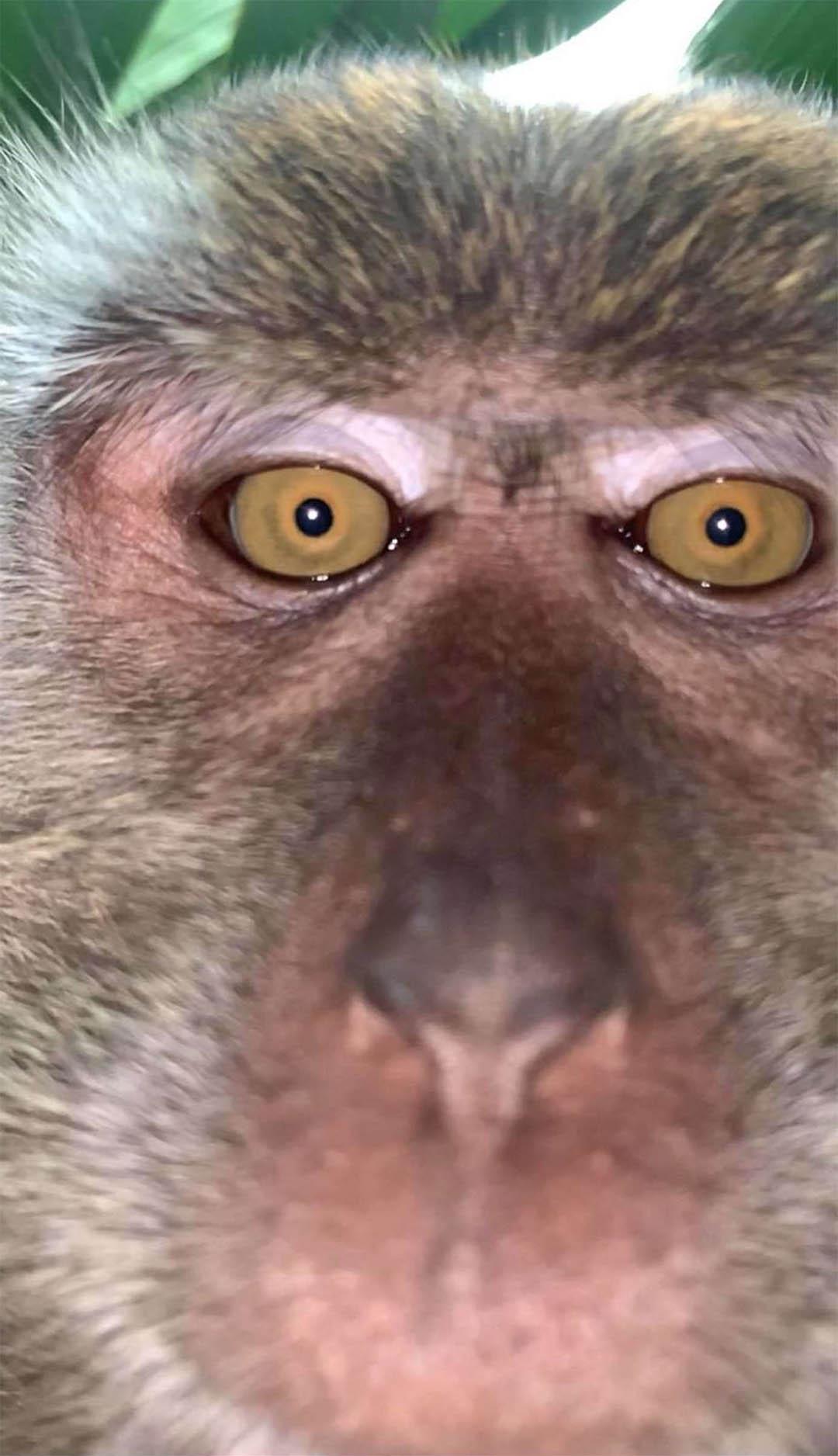 Mono roba teléfono