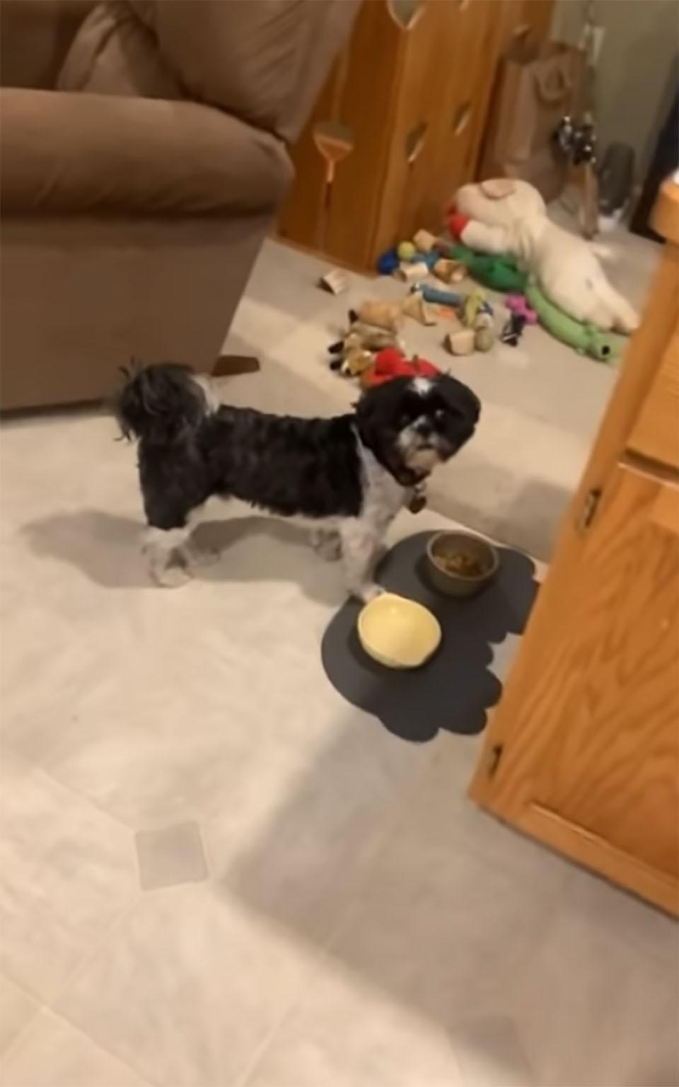 Perrito y su cena
