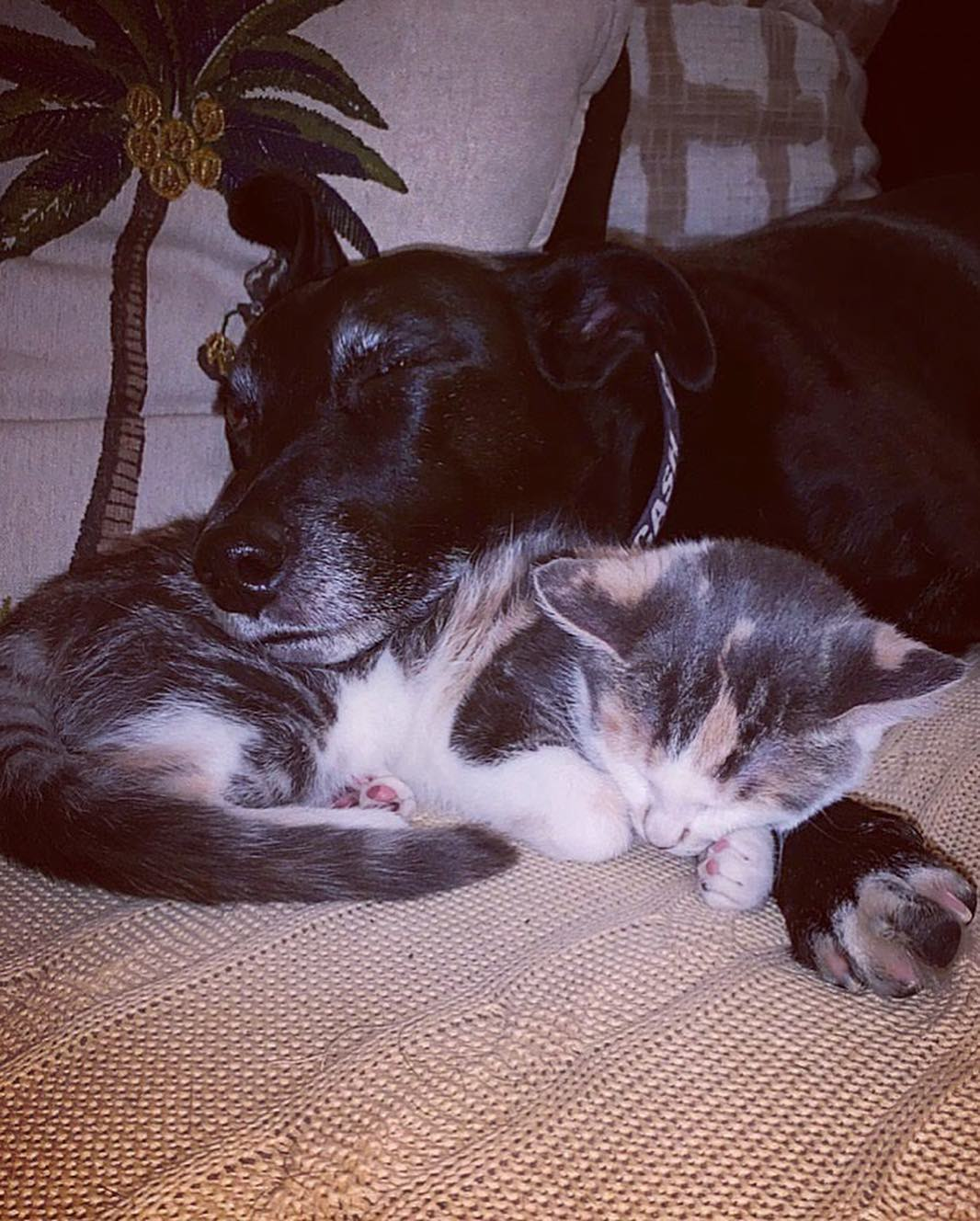 Perro demasiado educado y gatito tomando siesta