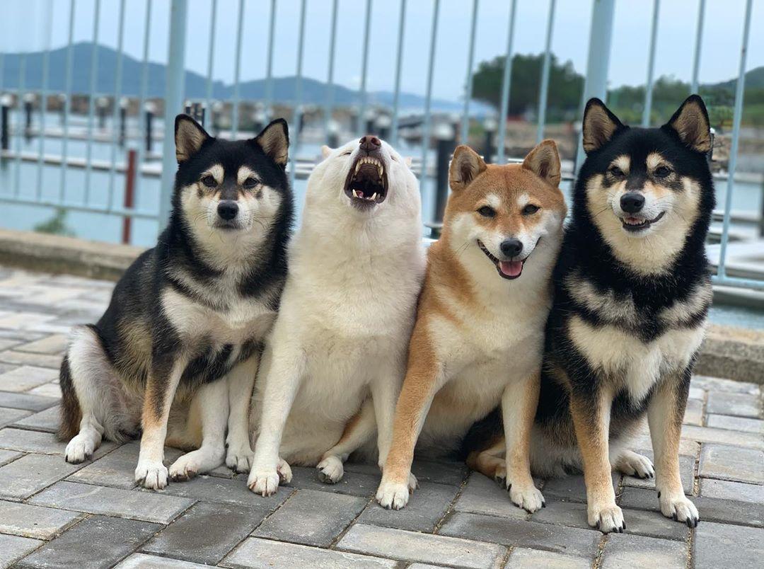 Perro gracioso y hermanos