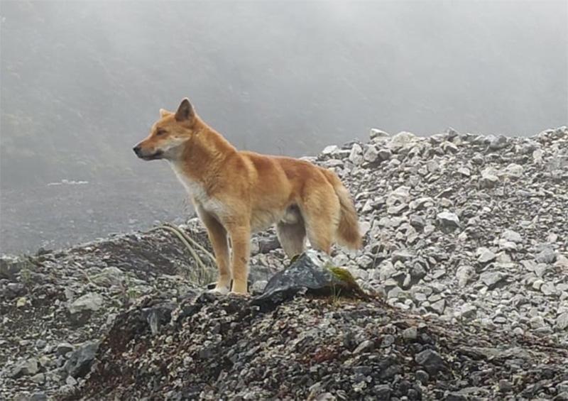 Perro reaparece en las montañas