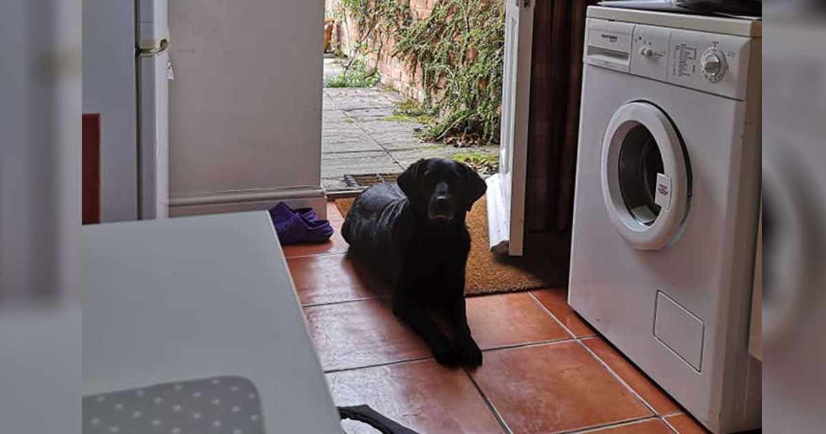 Perro visita a su vecina todos los días para el desayuno