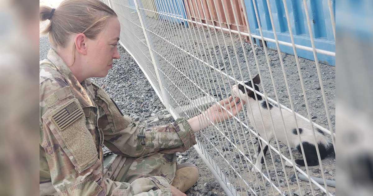 Soldado necesita ayuda para llevar a casa dos gatitos que rescató