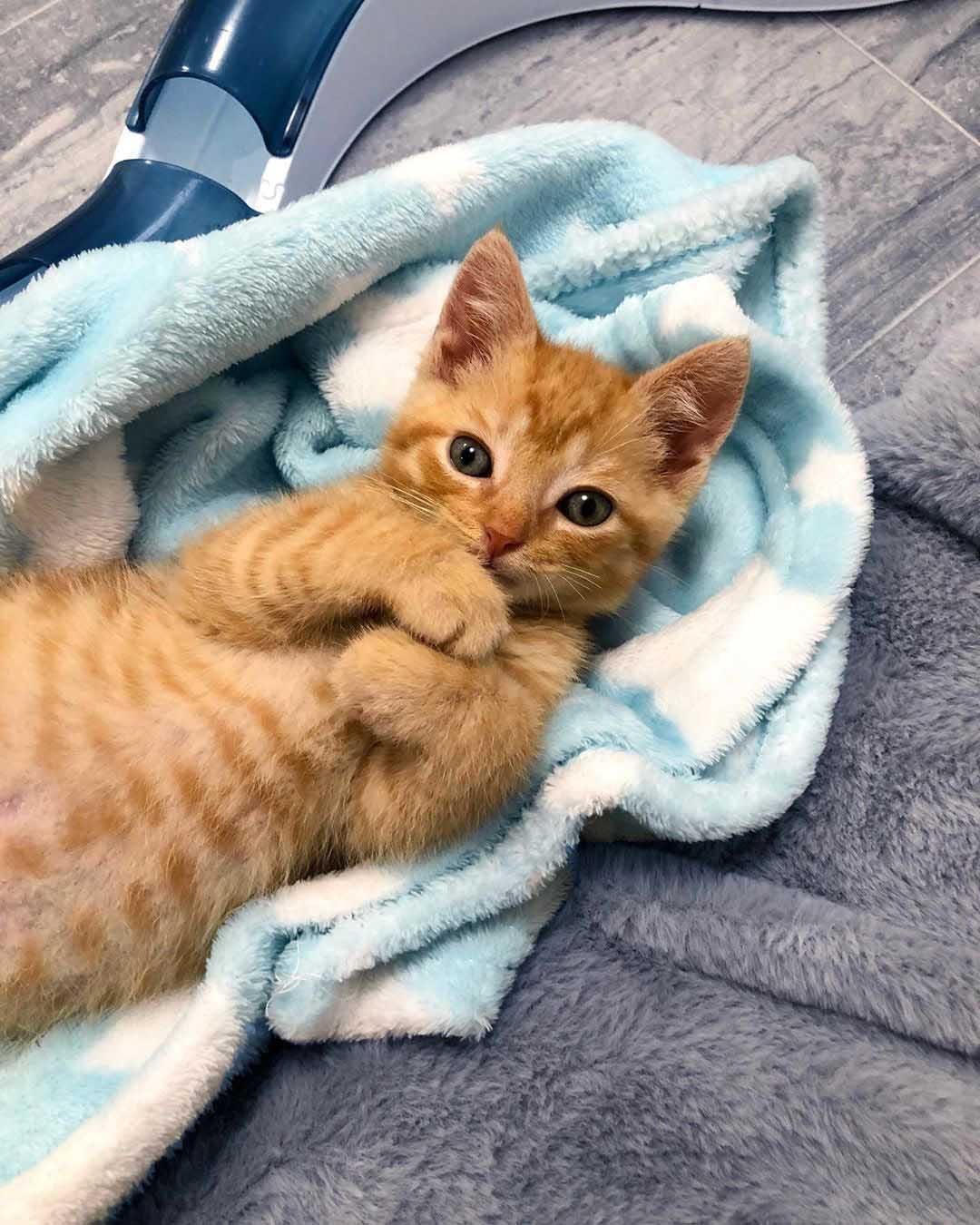Tierno gatito naranja