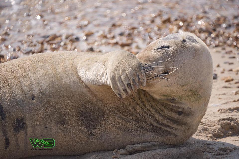 Traviesa foca juguetona