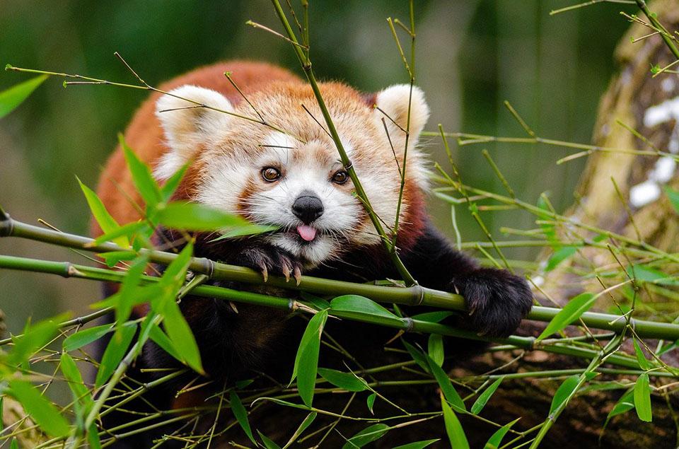 Ver animales lindos