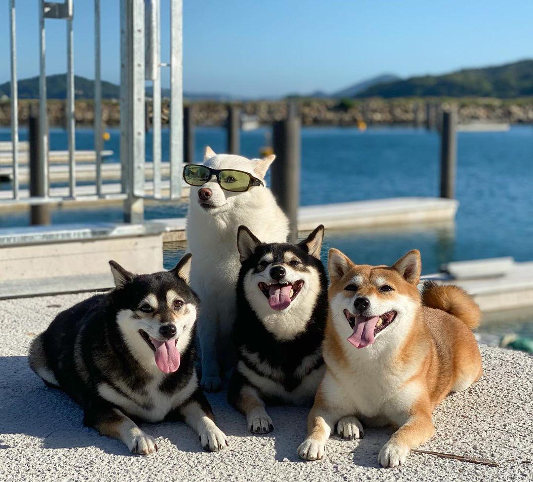sesion de fotos de mascotas