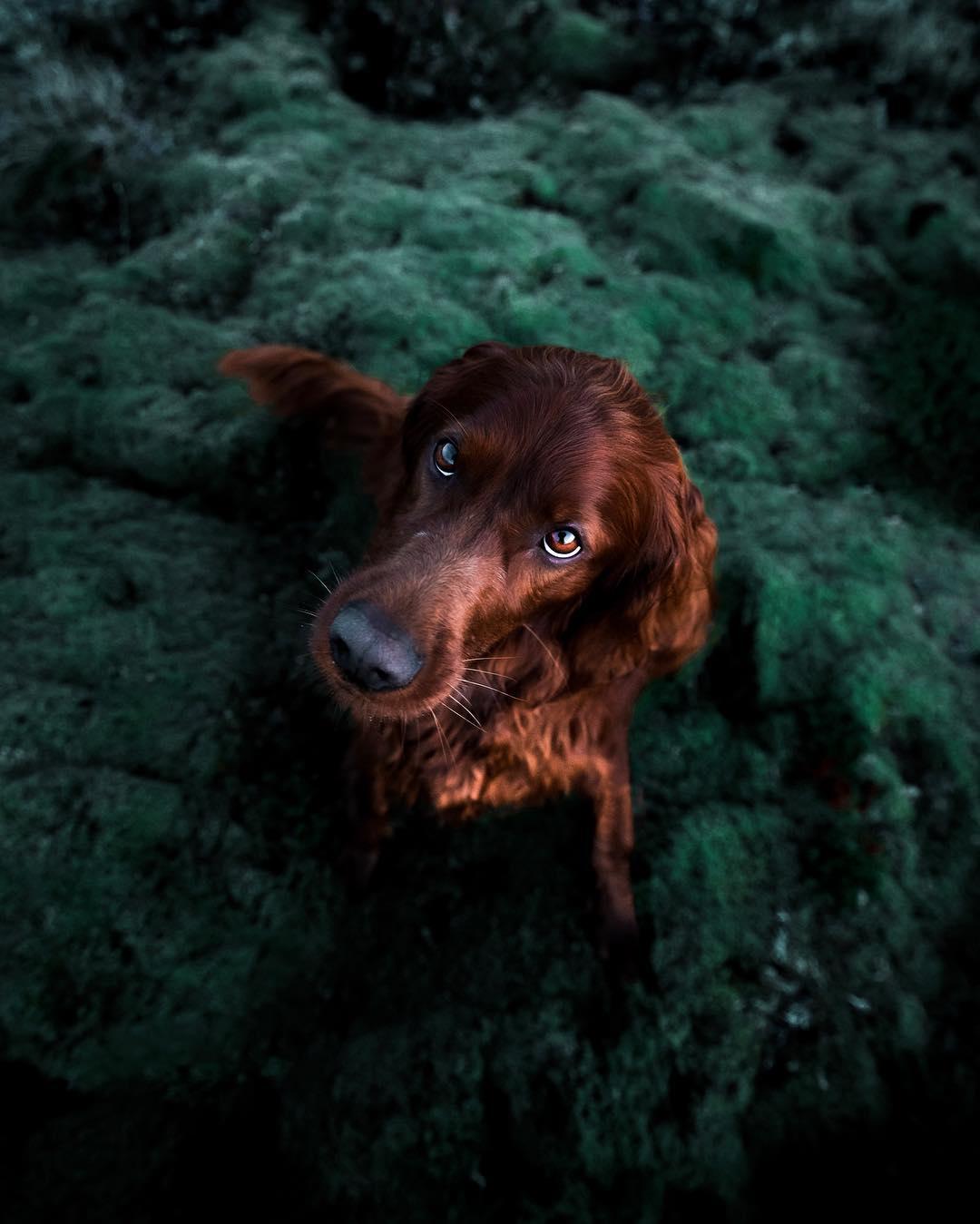 Fotos hermosas de perro en el bosque