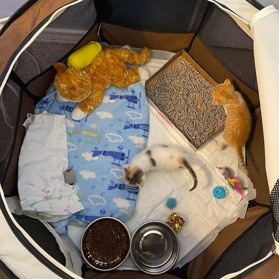 Adorables felinos bebés