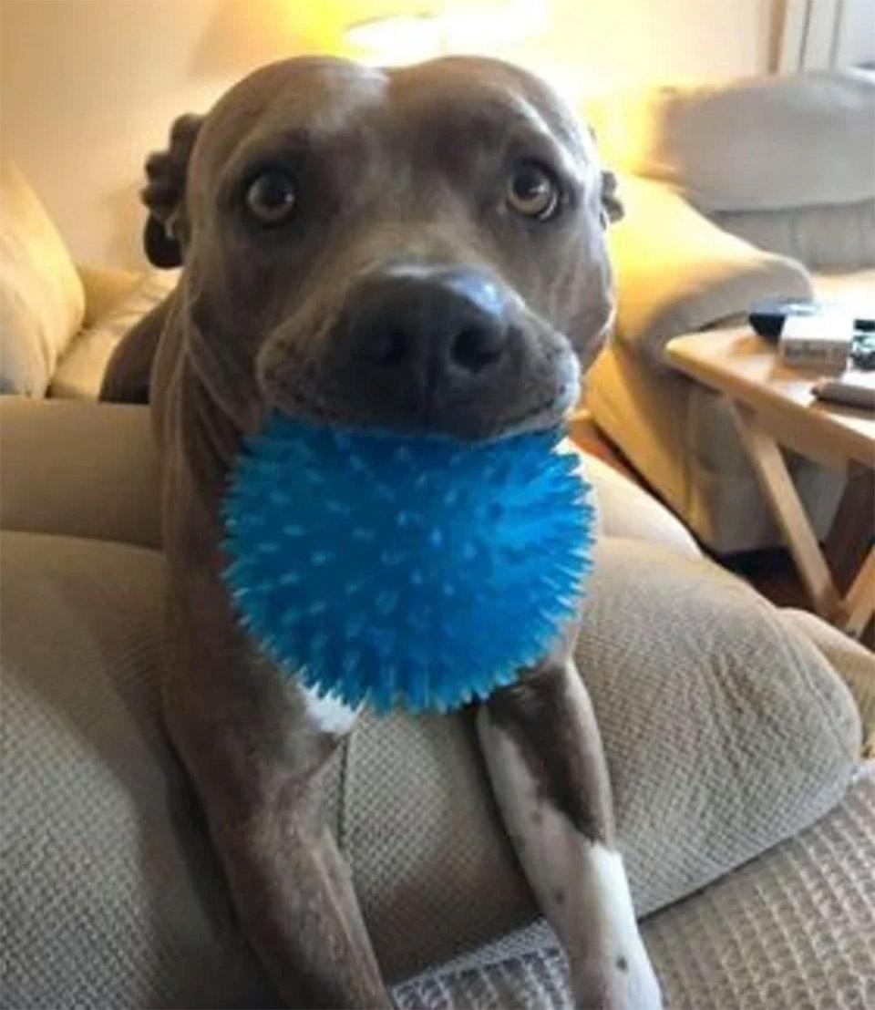 Blue con pelota
