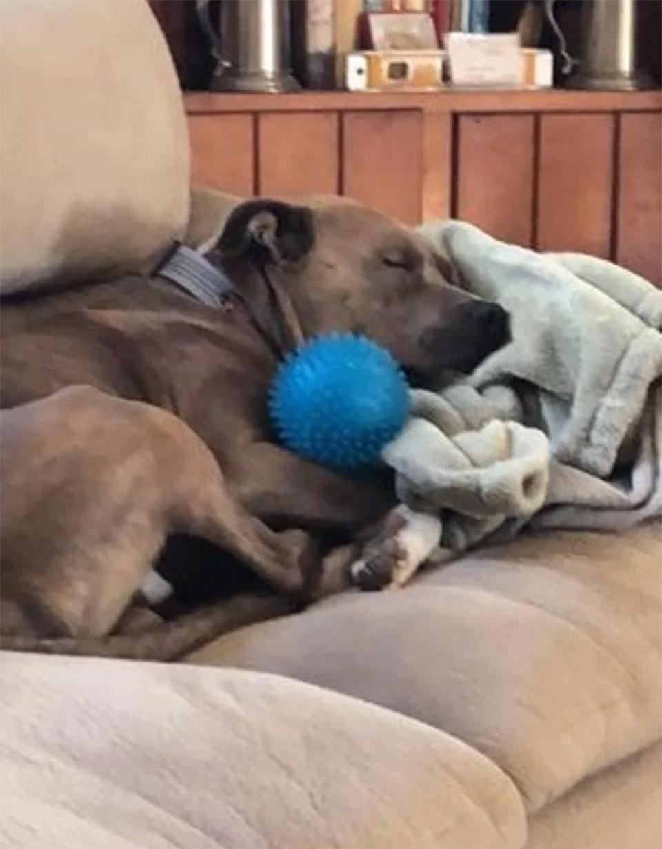 Blue dormido