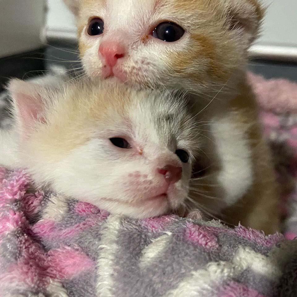 Dos gatitos abandonados