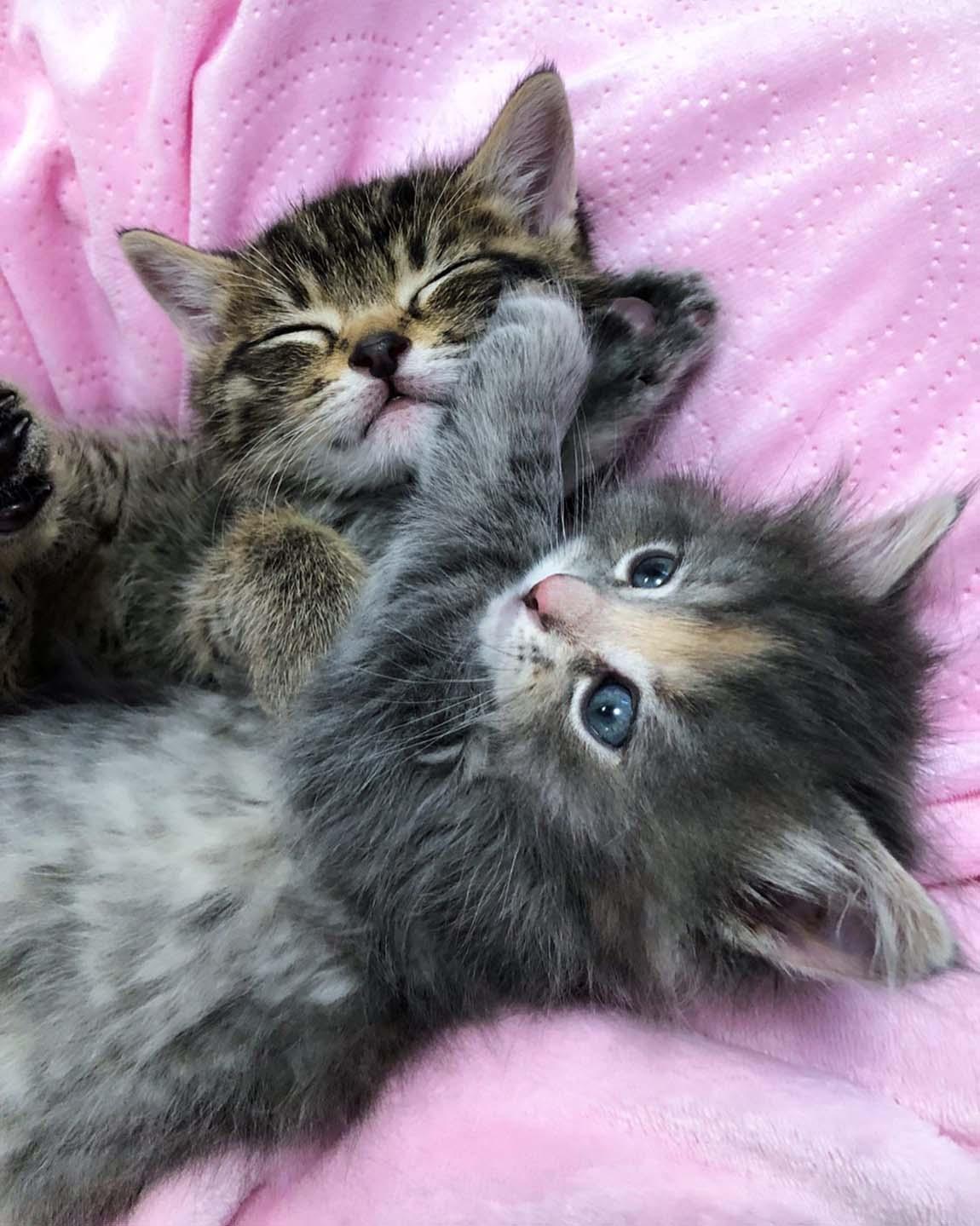 Dos pequeños felinos en su hogar temporal