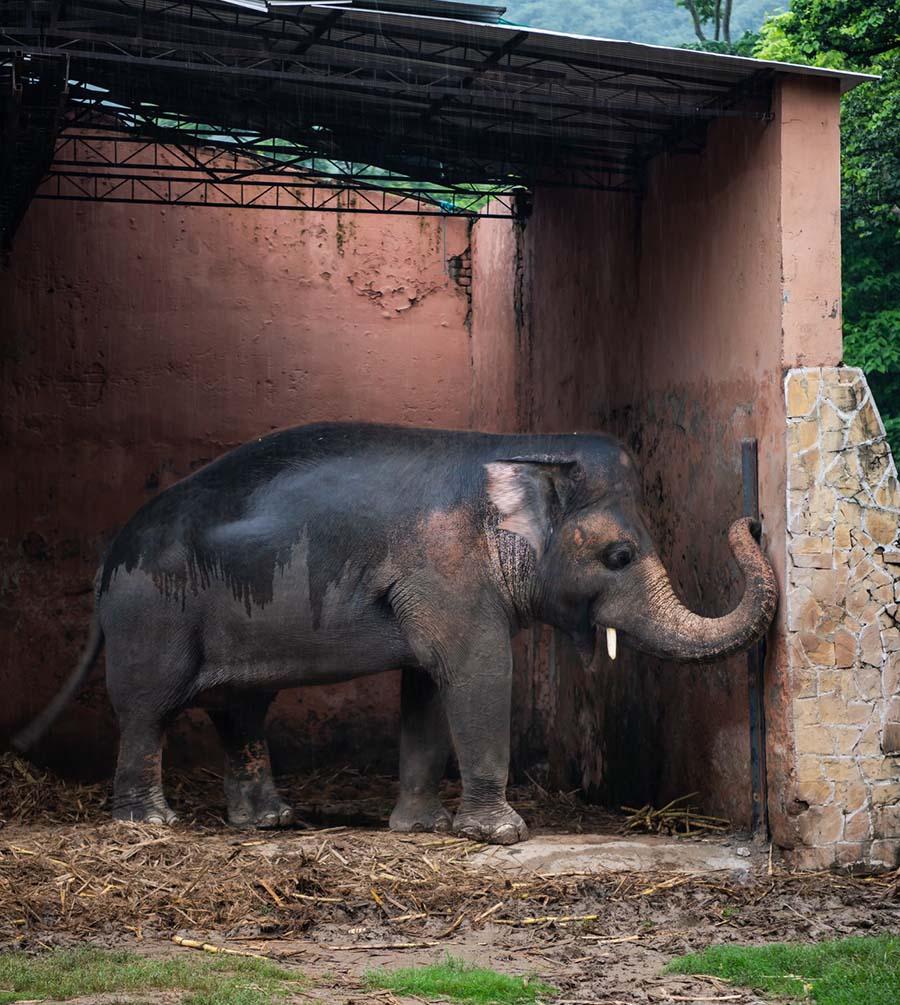 Elefante en soledad
