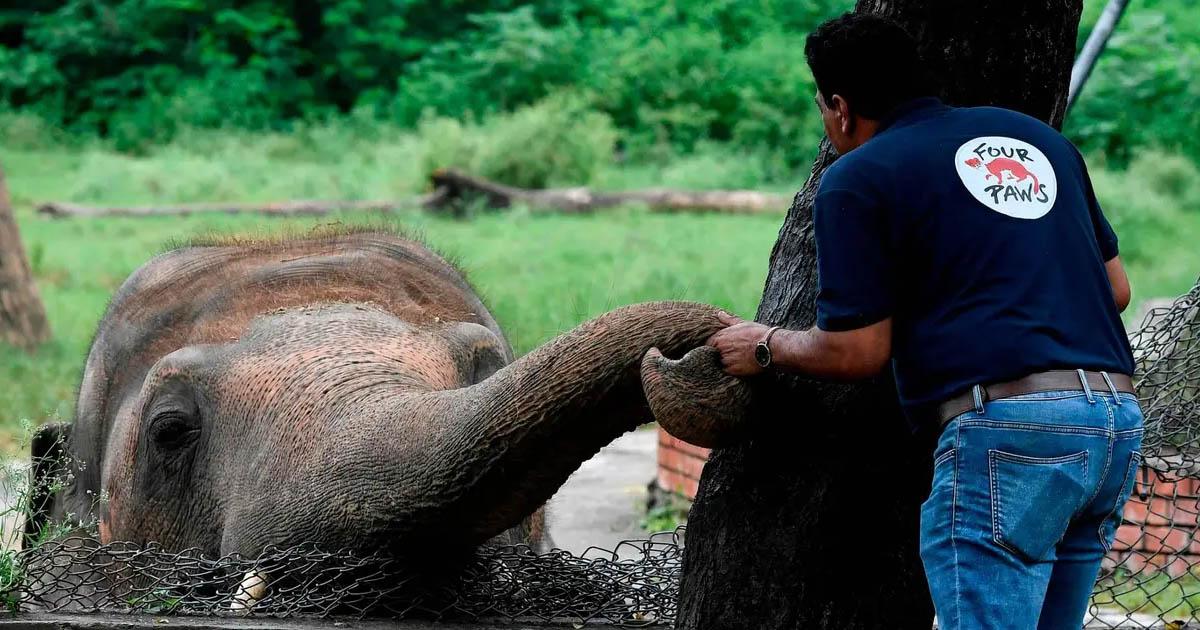 Elefante más solitario del mundo encuentra hogar