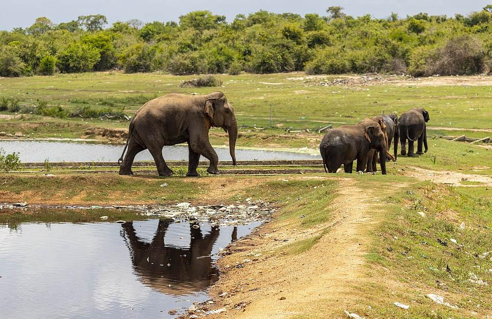 Elefantes hábitat