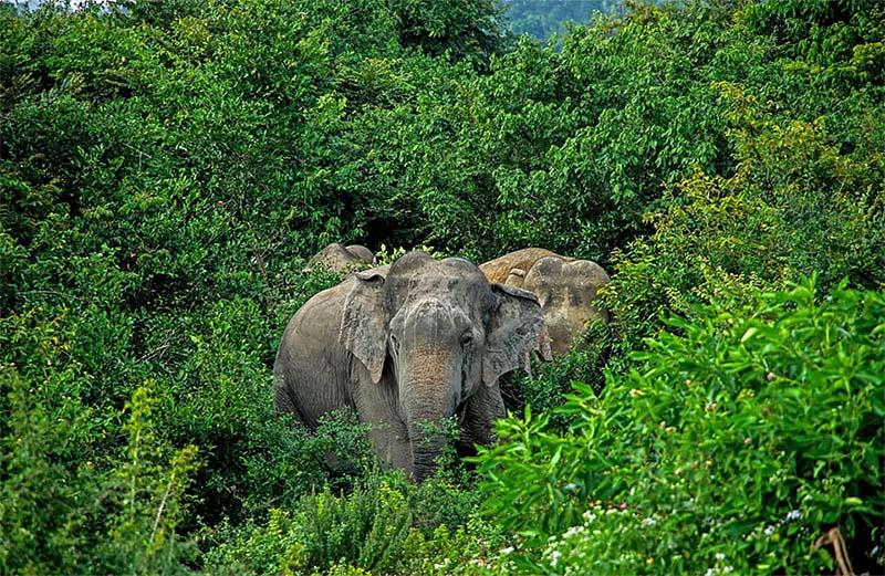 Manada de elefantes hambrientos