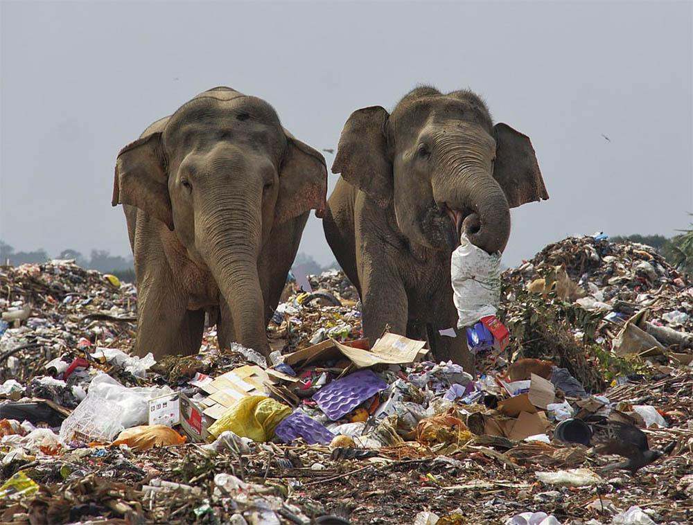 Elefantes vertedero
