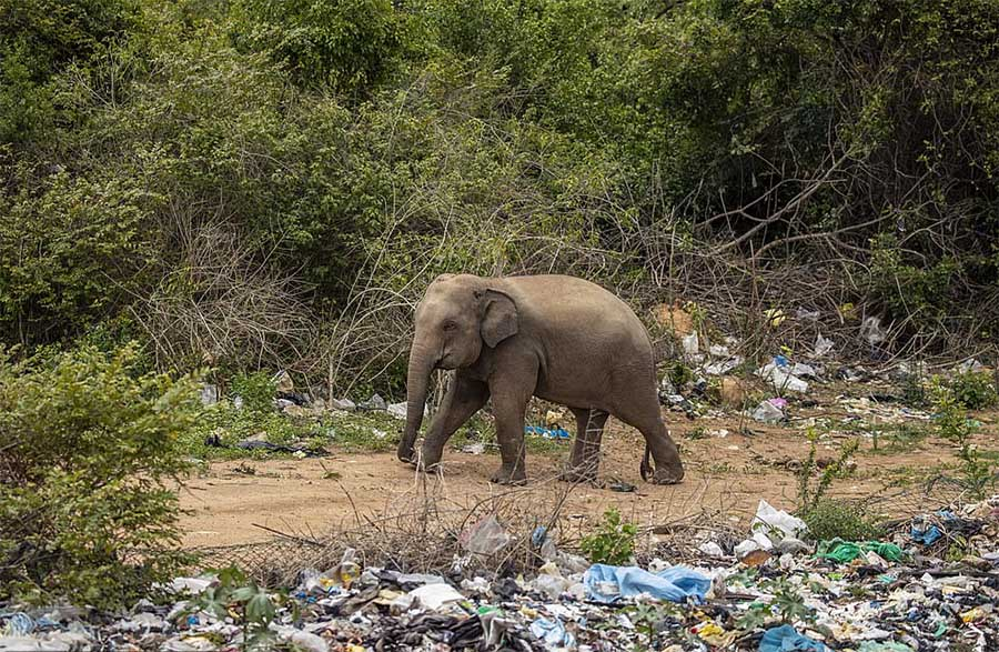 Elefantito basurero