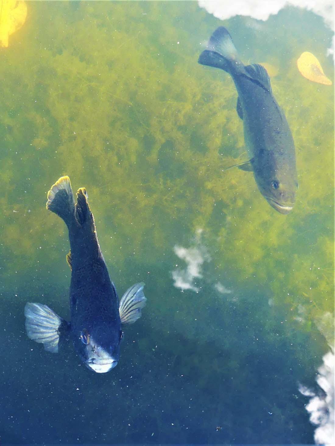 Encantadores peces