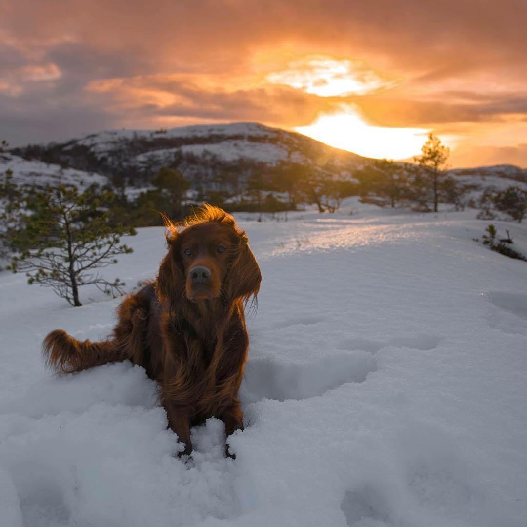 Fotografo y su perro en Noruega