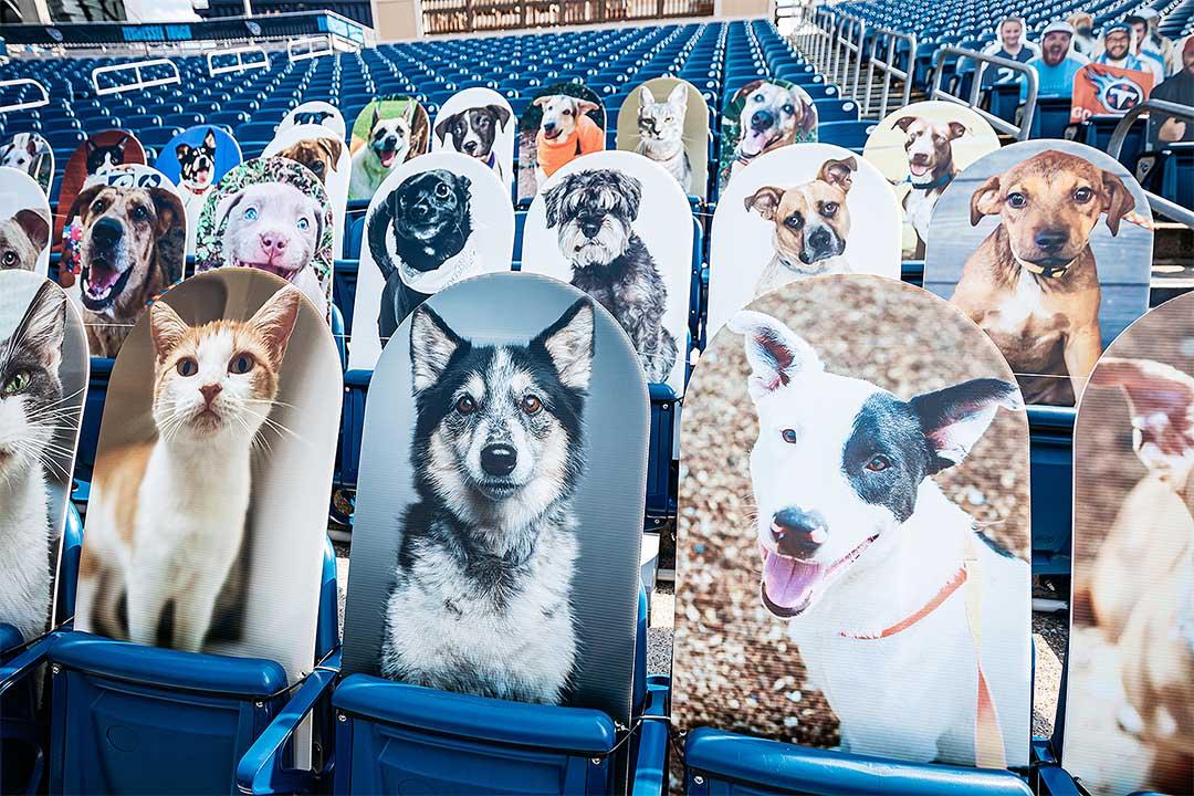 Fotos de perros adopción