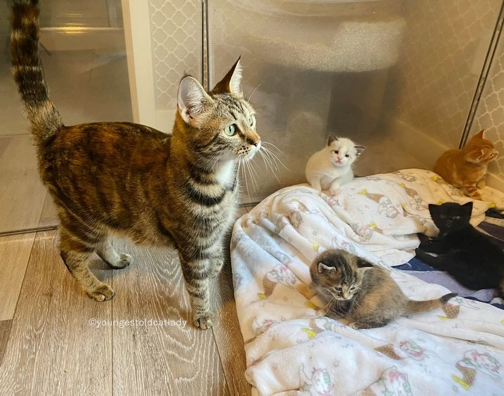 Gatita encuentra familia amable