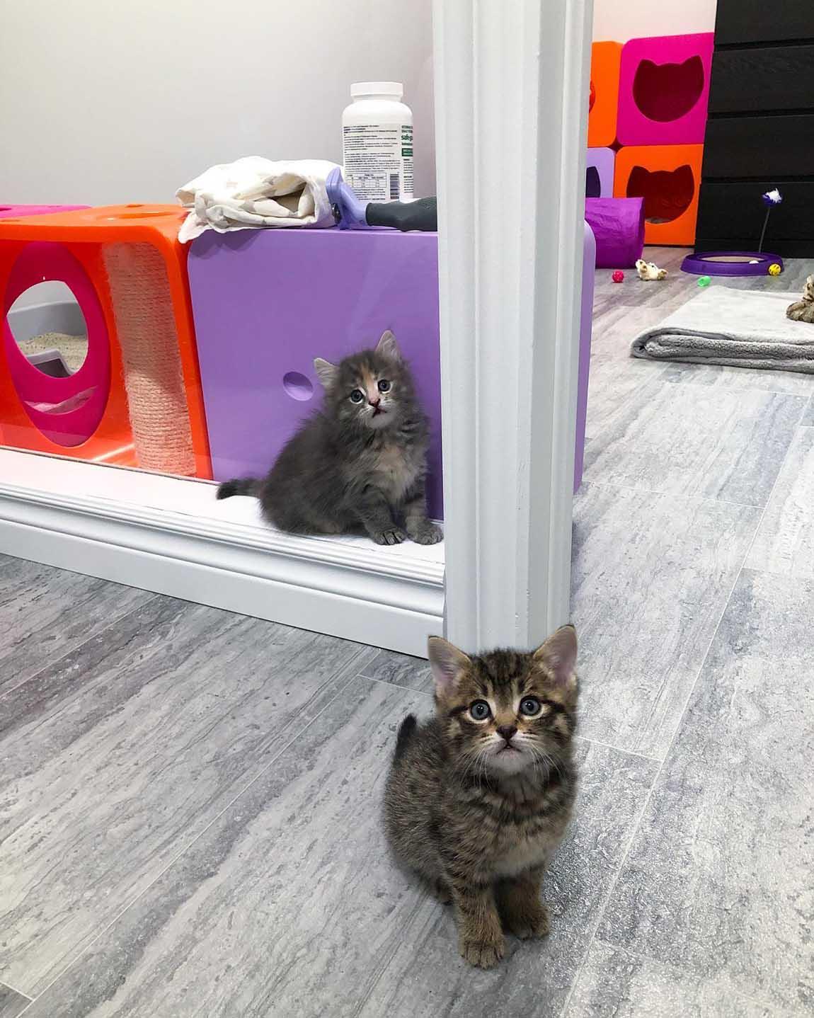 Gatita escapa de su habitación en hogar temporal