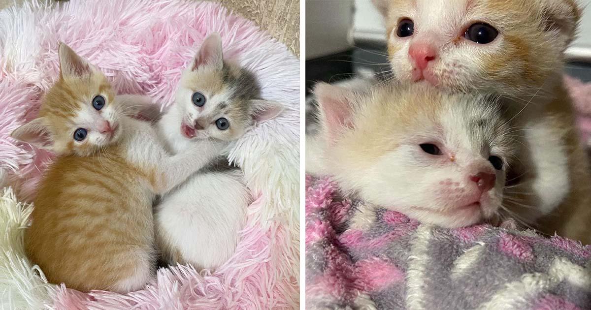 Gatitos abandonados en un estacionamiento son rescatados por una pareja